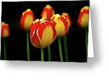 Poetically Tulip Greeting Card