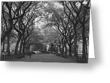Poets Walk In Central Park Greeting Card