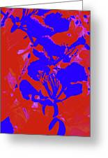 Poinciana Flower 4 Greeting Card