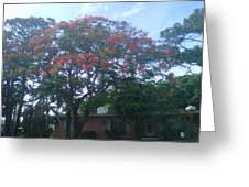 Poinciana In Summer Time Greeting Card