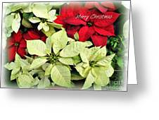 Poinsetta Mix Greeting Card