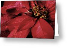Poinsettia 876 Greeting Card