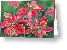 Poinsettia Magic Greeting Card