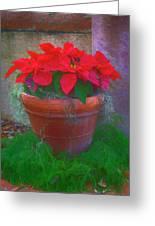 Poinsettia Pot Greeting Card