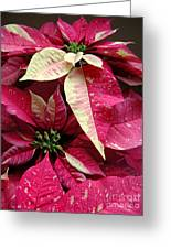 Poinsettias -  Painted And Speckled Greeting Card