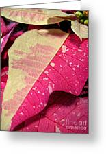 Poinsettias -  Painted And Speckled Up Close Too Greeting Card