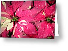 Poinsettias -  Red And White Speckled Greeting Card
