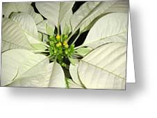 Poinsettias -  Winter White Center Greeting Card
