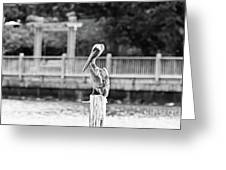 Point Clear Alabama Brown Pelican - Bw Greeting Card