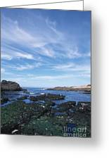 Point Lobos Seascape Greeting Card