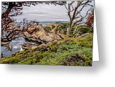 Point Lobos State Reserve Greeting Card