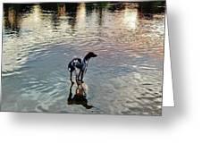 Pointer Dog Greeting Card