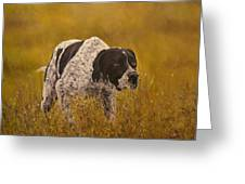 Pointer...to The Point....... Greeting Card