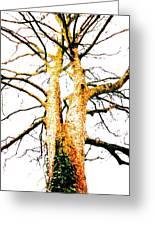 Pointillised Tree Greeting Card