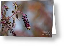 Pokeweed Berries 20121020_134 Greeting Card