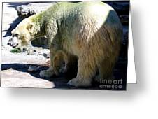 Polar Bear 2 Greeting Card