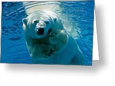 Polar Bear Contemplating Dinner Greeting Card