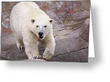 Polar Bear Prowl  Greeting Card
