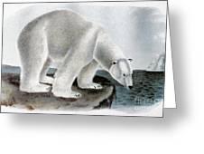 Polar Bear (ursus Maritimus) Greeting Card