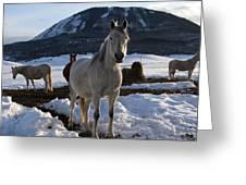 Polish Arab Horse Family Greeting Card