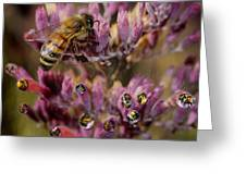 Pollen Bees Greeting Card