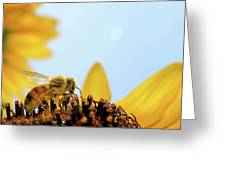 Pollen-coated Honey Bee On A Sunflower Greeting Card