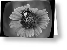 Pollen Collector Bw Greeting Card