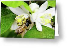 Pollen - Covered - Bee Greeting Card