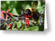 Pollen Covered Bee Greeting Card