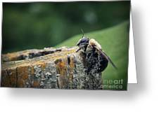 Pollen Dusted Bee Greeting Card