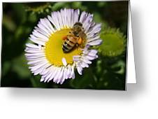 Pollen Harvest Greeting Card