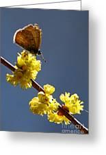 Pollen Pickup Greeting Card