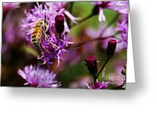 Pollen Powdered Bee Greeting Card