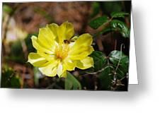 Pollinate Greeting Card