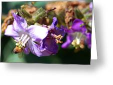 Pollinating 3 Greeting Card