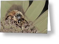Pollinating Bee Greeting Card