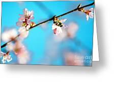 Pollination 1.03 Greeting Card