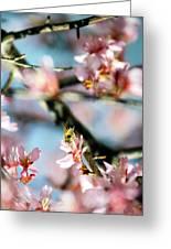 Pollination 1.06 Greeting Card