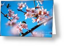 Pollination 1.11 Greeting Card