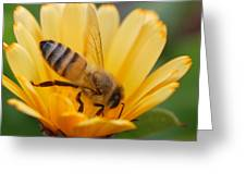 Pollination 2 Greeting Card