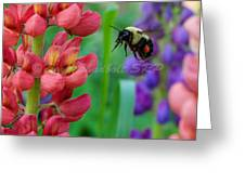 Pollination Greeting Card