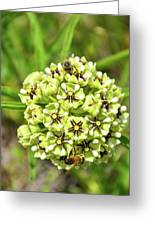 Pollination Happening Greeting Card