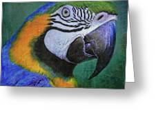 Polly Who Greeting Card