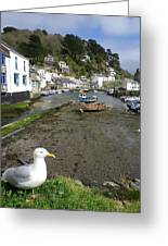 Polperro Harbour Cornwall And Seagull Greeting Card
