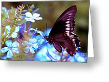 Polydamas Swallowtail Butterfly Greeting Card