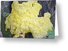 Polymyxa Slime Mold Greeting Card