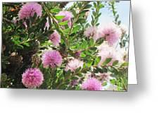 Pom Pom Tree Greeting Card
