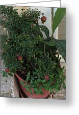 Pomegranate In The Pot Greece  Greeting Card