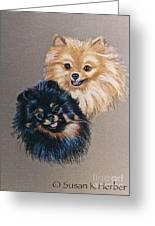 Pomeranian Pair Greeting Card