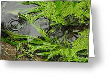 Pond Abstract I Greeting Card